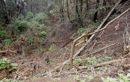 deforestacion-jalisco-72.jpg