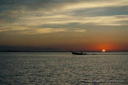 IDG1188 Holbox, Quintana Roo.t5616ecda.m800.w.0ConabioCornerCopy.jpg.xCdxg1TlJKq591tlrCGntxaxypFWiMIuViysIevCPlHg.jpg