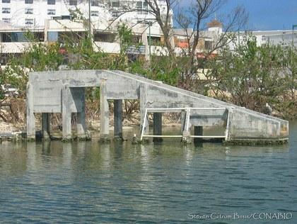 SCB0002 Cancún, Quintana Roo.t4f9ac8b2.m800.w.0ConabioCornerCopy.jpg.xVBk5E2b6Iby_uET0lkWf3Mmn1XNniygXe0GWpAsGyWw.jpg