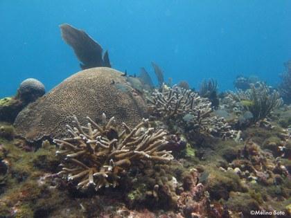 Arrecife y algas_MelinaSoto.jpg