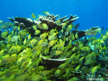 El Golfo de México y el Caribe: amenazas y esperanzas