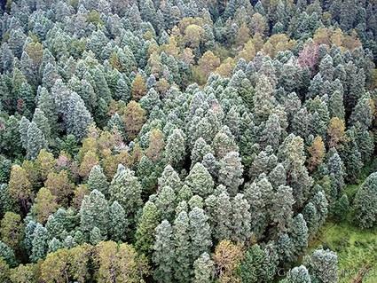El manejo forestal comunitario como eje de la política forestal
