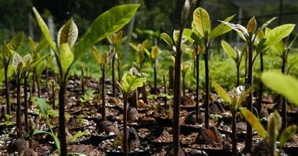 <br>La transición política abre oportunidades para los bosques y sus habitantes