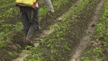 Informe-sobre-los-plaguicidas-altamente-peligrosos-en-Argentina.jpg