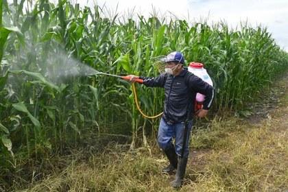<br>¿Funcionan hoy las leyes mexicanas para el control de los agroquímicos?