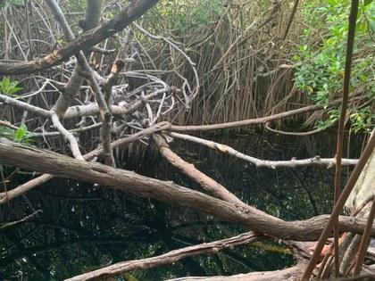 Cenote a la entrada de Sian Ka'an.jpg