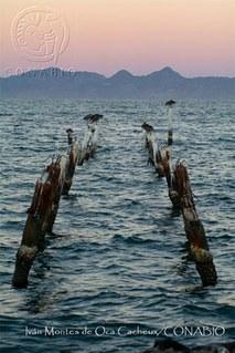 Efectos del cambio climático en los litorales