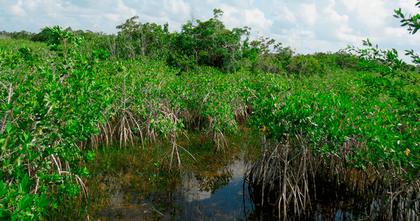 banners_cap_manglares-1280x674.png